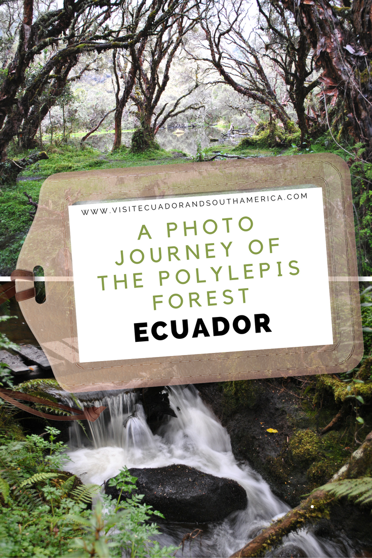 a-photo-journey-of-the-polylepis-forest-in-ecuador