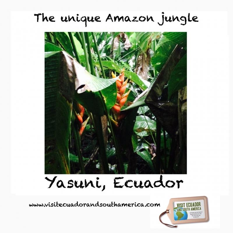 Yasuni / www.visitecuadorandsouthamerica.com / #visitsamerica