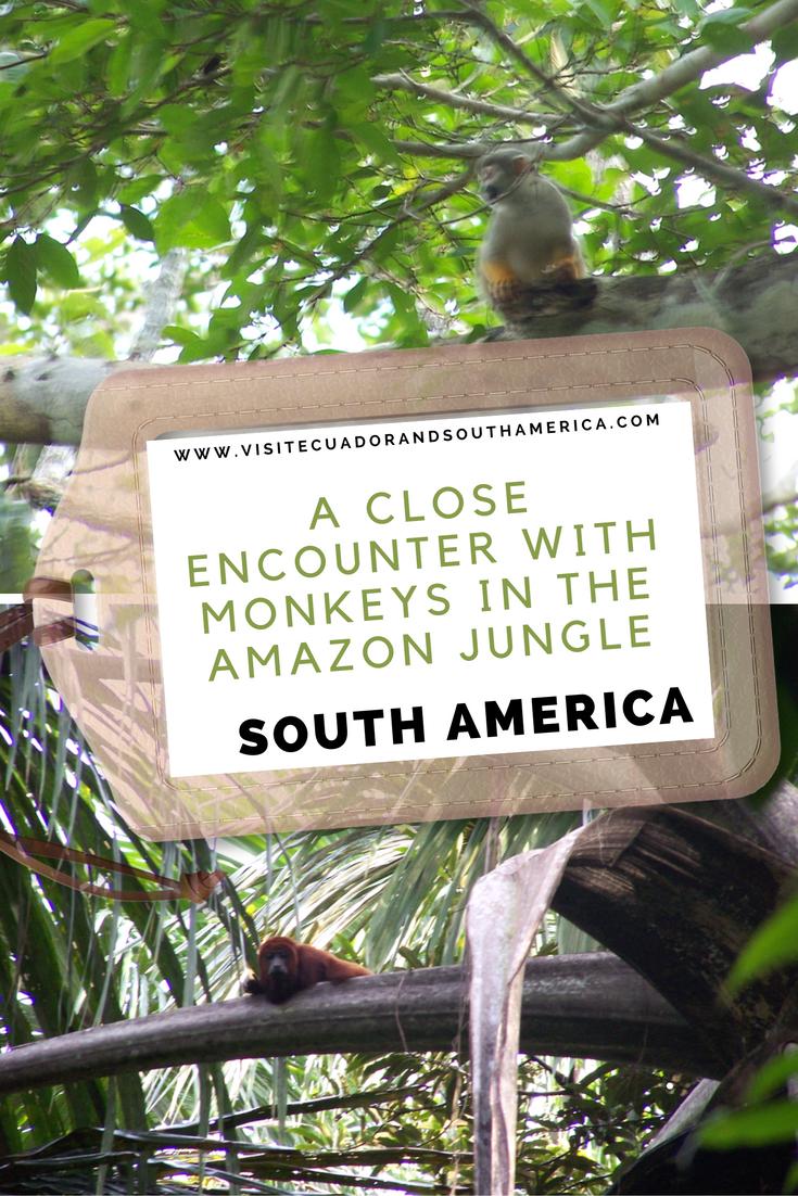 monkeys-amazon-jungle