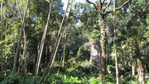 Jardim_Botanico_Rio_de_Janeiro_Victor_Eekhof - Victorstravels.com