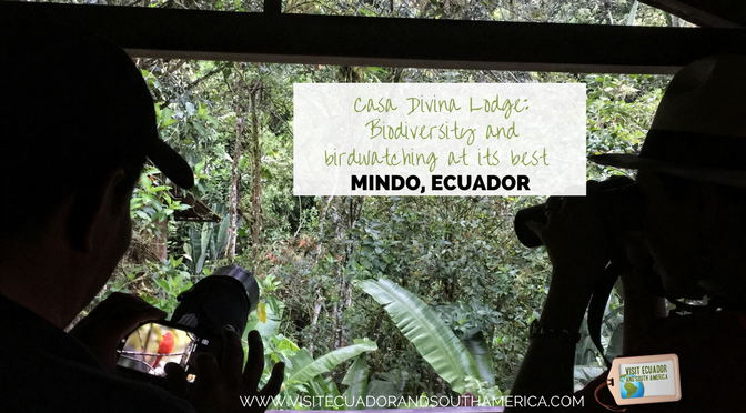Casa Divina Lodge: Biodiversity and birdwatching at its best in Mindo, Ecuador