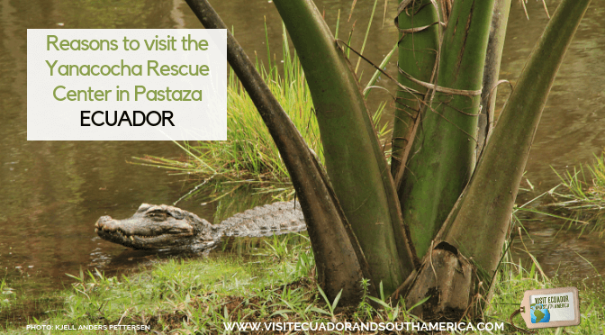 Reasons to visit the Yanacocha Rescue Centre in Pastaza