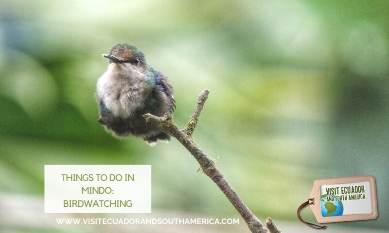 Things to do in Mindo: Birdwatching