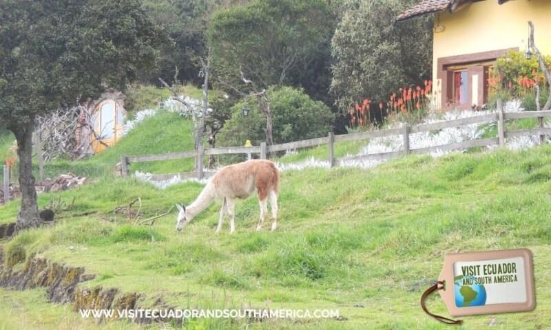 The Secret Garden Cotopaxi (4)