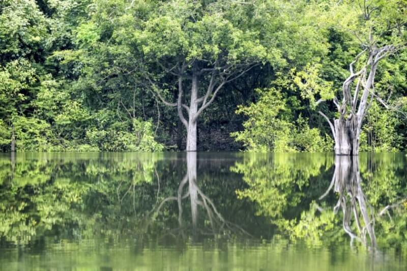 Manaus: Amazon Tour at Juma Floating Lodge