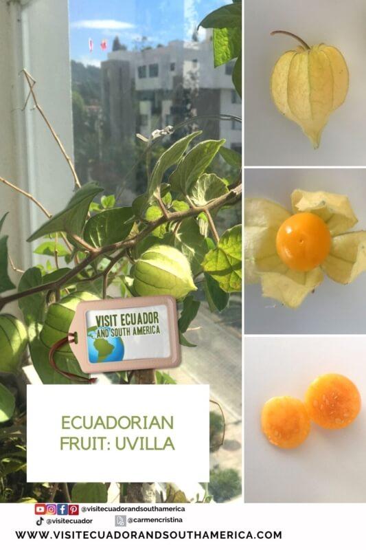 Ecuadorian fruit uvilla exotic fruit golden berry (3)