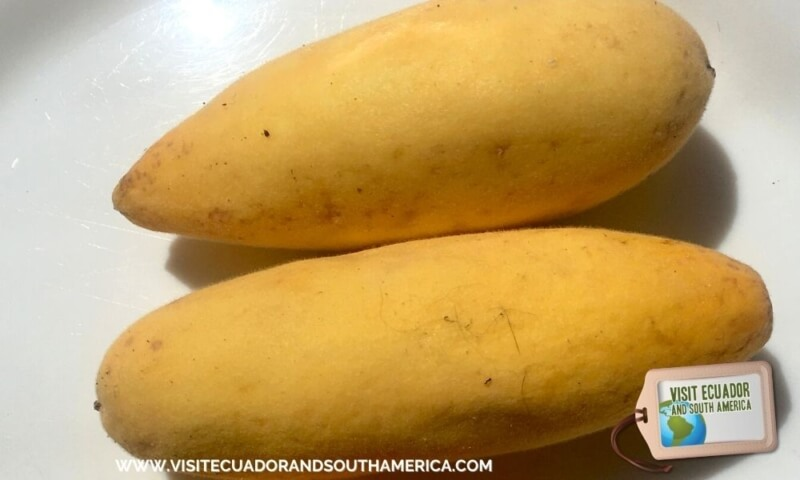 Taxo Ecuador Ecuadorian fruit (4)
