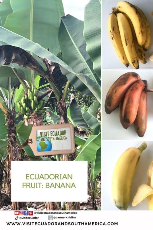 banana Ecuador Ecuadorian fruit (2)