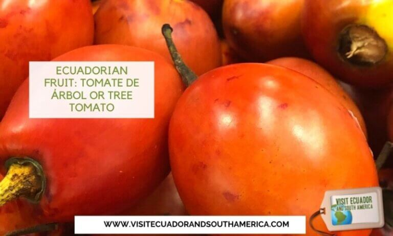 tomate de arbol tree tomato