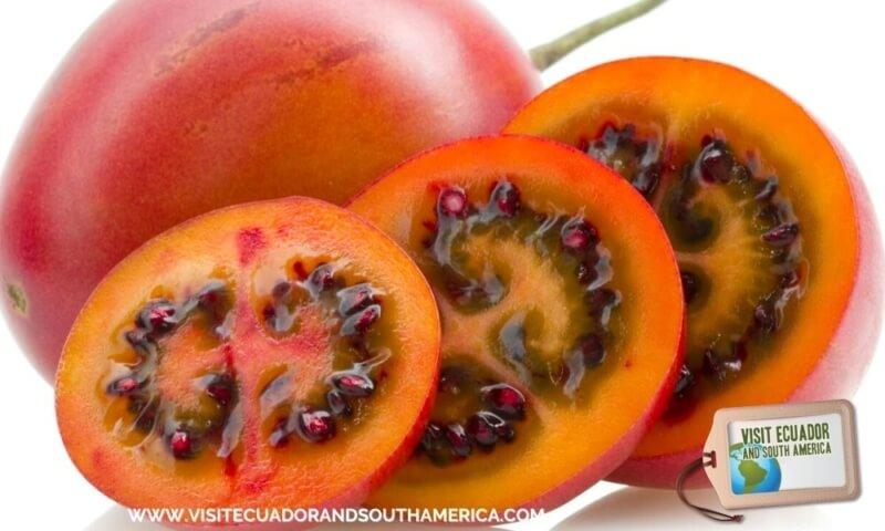 tomate de arbol tree tomato (4)